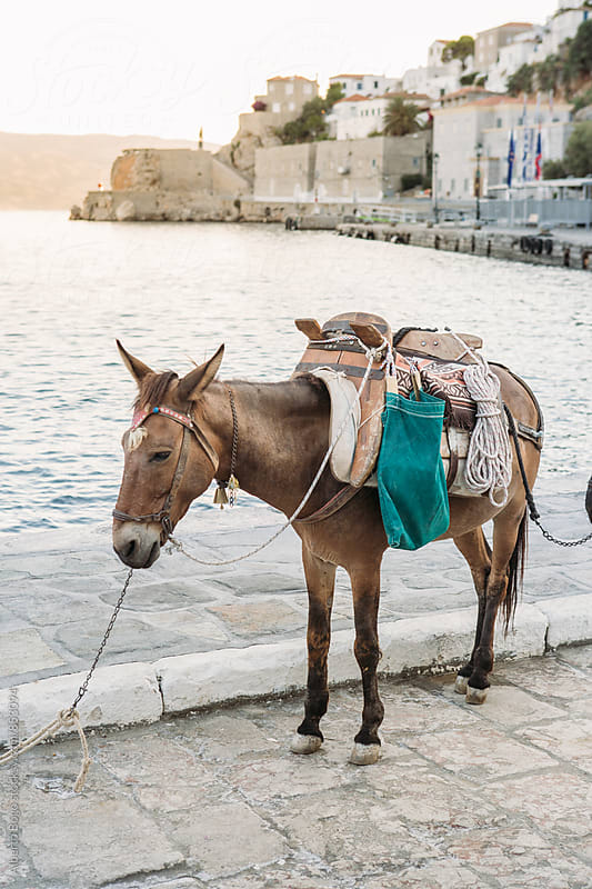 Donkeys at the port by Alberto Bogo for Stocksy United