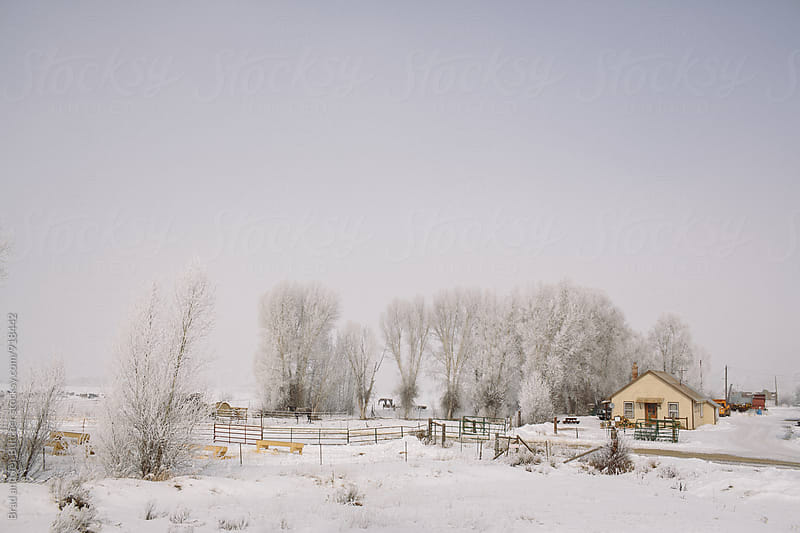 Farm in Winter by Brad and Jen Butcher for Stocksy United