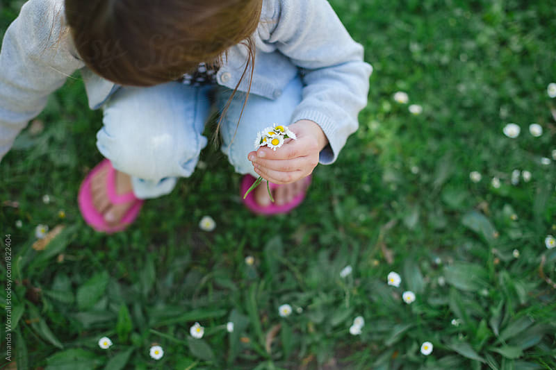 Young girl picking little daisies by Amanda Worrall for Stocksy United