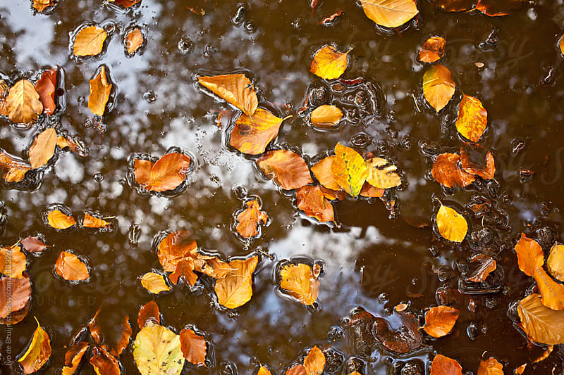 Yellow and red coloured leaves in a pond by Ivo de Bruijn for Stocksy United