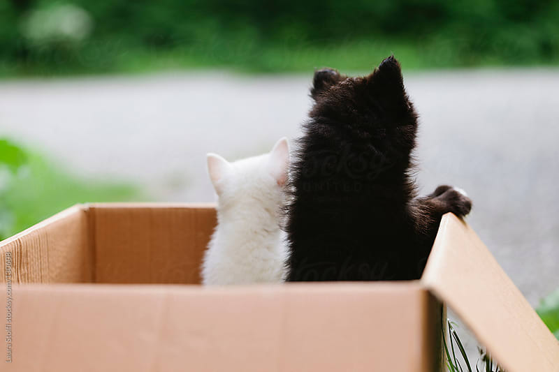 Stray puppies seen from behind while peeping out from cardboard box by Laura Stolfi for Stocksy United