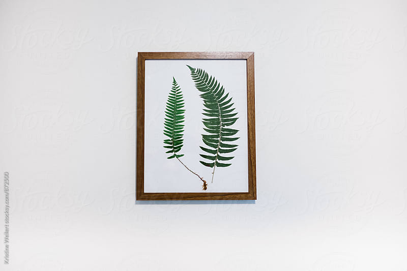 Green Ferns in a Frame by Kristine Weilert for Stocksy United