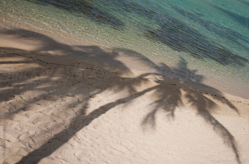 Palm tree shadows on the beach by Trinette Reed for Stocksy United