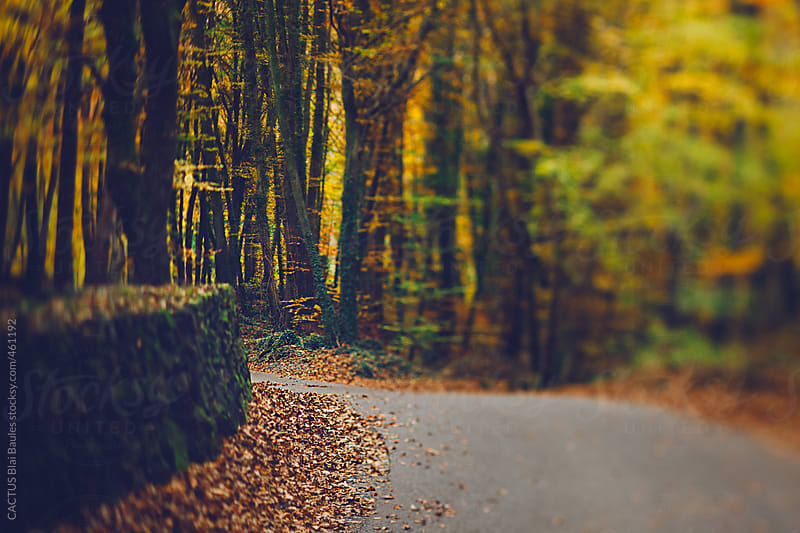 Autumn scene. Road in the middle of the forest. by CACTUS Blai Baules for Stocksy United