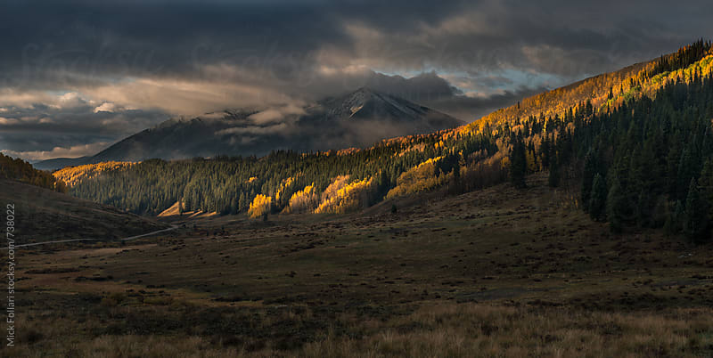 Morning light on aspen trees in the mountains by Mick Follari for Stocksy United