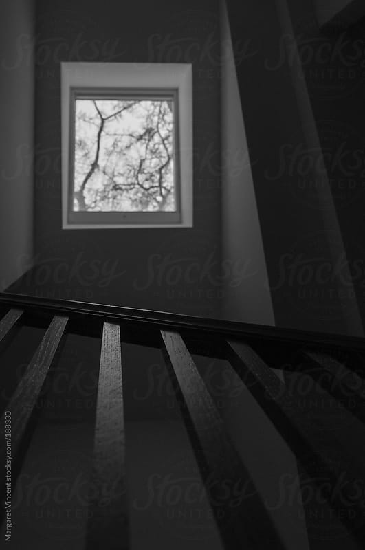 skylight with branches by Margaret Vincent for Stocksy United