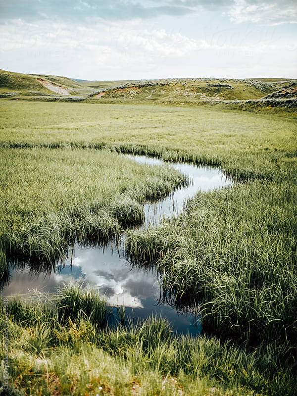 River Running Through Grass by Christian Gideon for Stocksy United