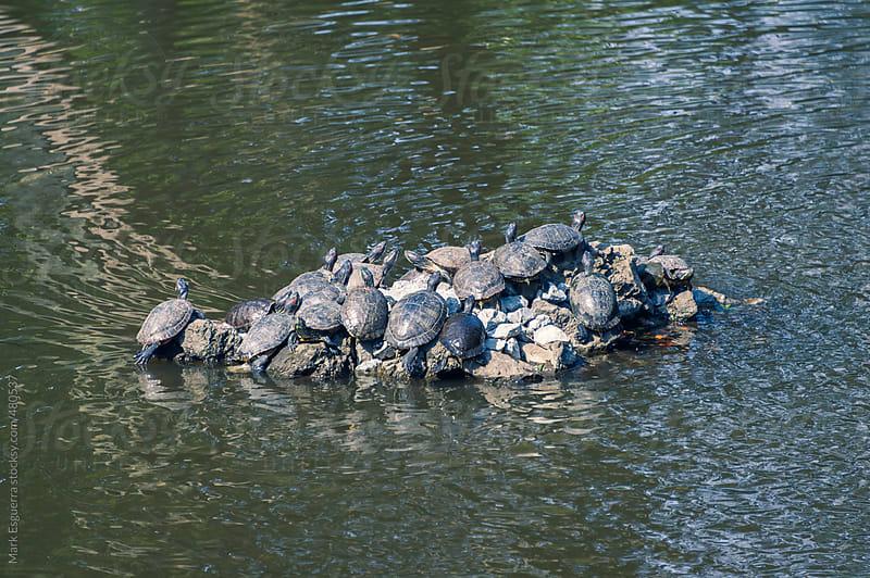 Omiya turtles by Mark Esguerra for Stocksy United
