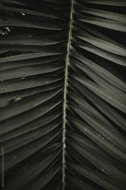 dark green palm tree leaves by Nicole Mason for Stocksy United