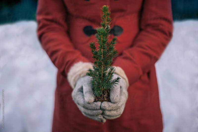 Woman holding a little fir tree by Kitty Kleyn for Stocksy United