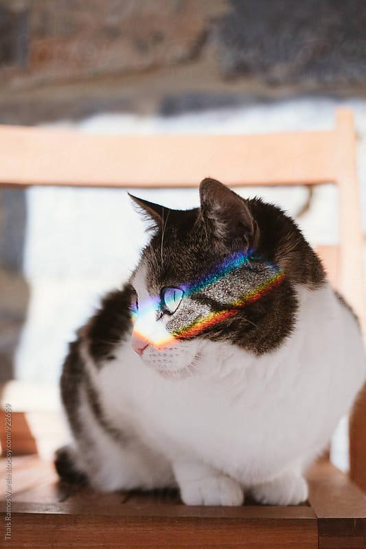 cat with rainbow across her eyes by Thais Ramos Varela for Stocksy United