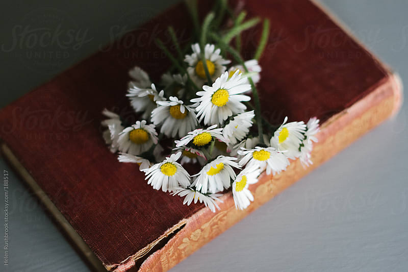 Daisies on an antique book by Helen Rushbrook for Stocksy United