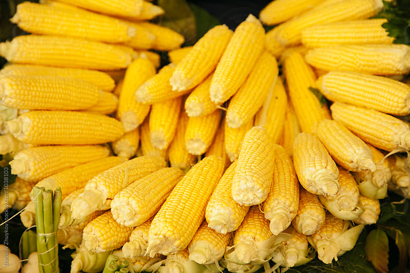 Sweet corns For Sale At Market by Borislav Zhuykov for Stocksy United
