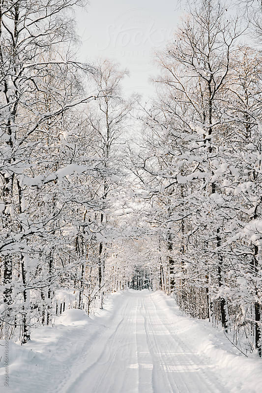 Snowy Tree-lined Winter Road by Stephen Morris for Stocksy United