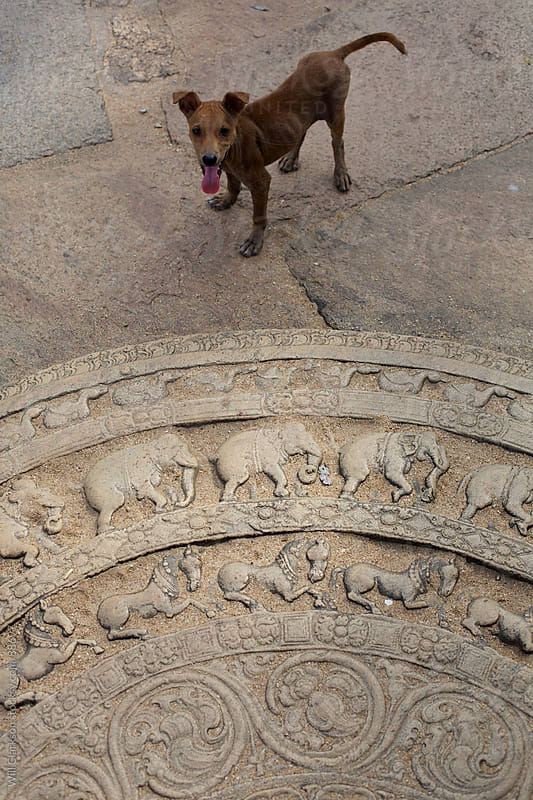 A stray dog stands next to a Sri Lankan temple entrance by Will Clarkson for Stocksy United