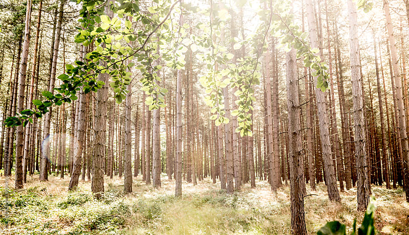 Summer in the forest by Craig Holmes for Stocksy United