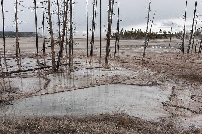 Yellowstone Geyser Basin by Adam Nixon for Stocksy United