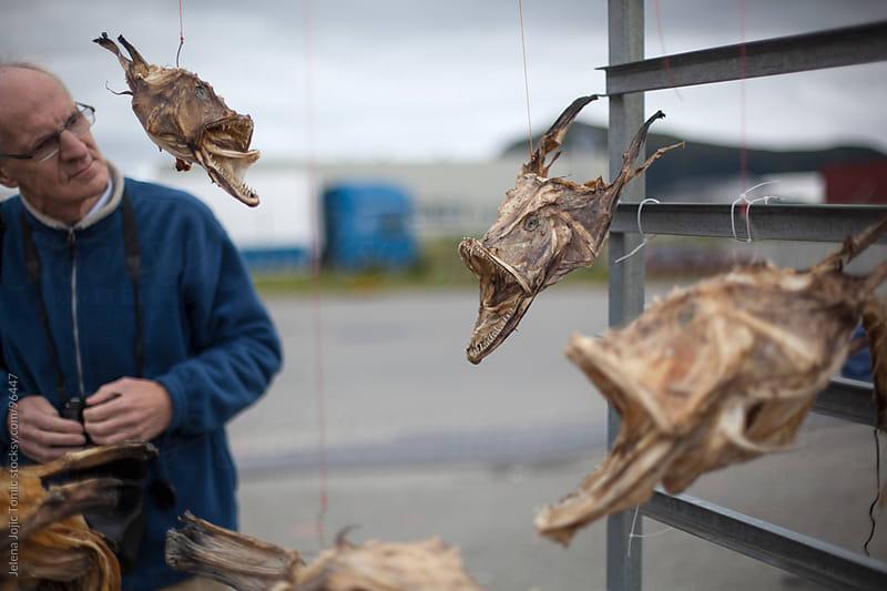 Predator fish by Jelena Jojic Tomic for Stocksy United