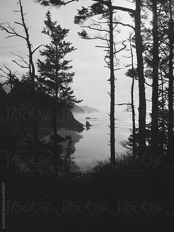 Oregon Coast Beach Through Dark Trees by Evan Dalen for Stocksy United