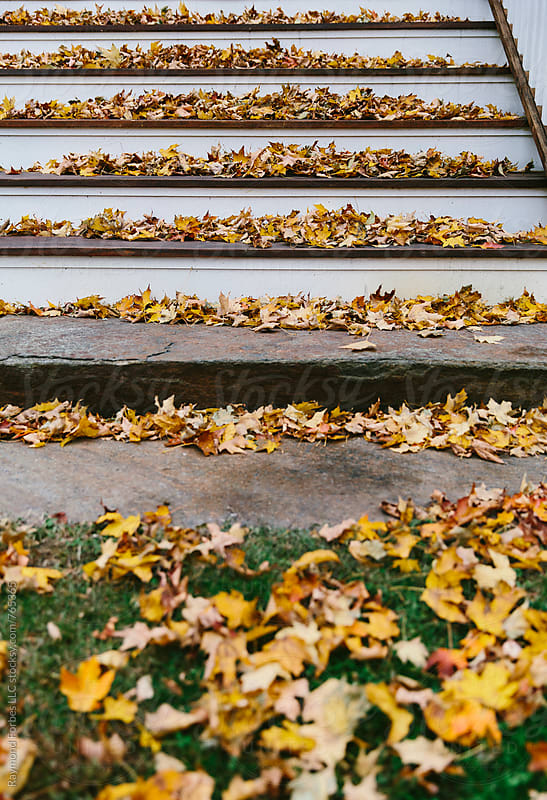 Porch Leaves by Raymond Forbes LLC for Stocksy United