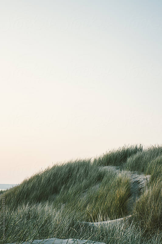 Sunset Dunes by Agencia for Stocksy United