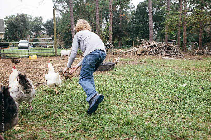 Boy chasing chickens in barnyard by Stephen Morris for Stocksy United