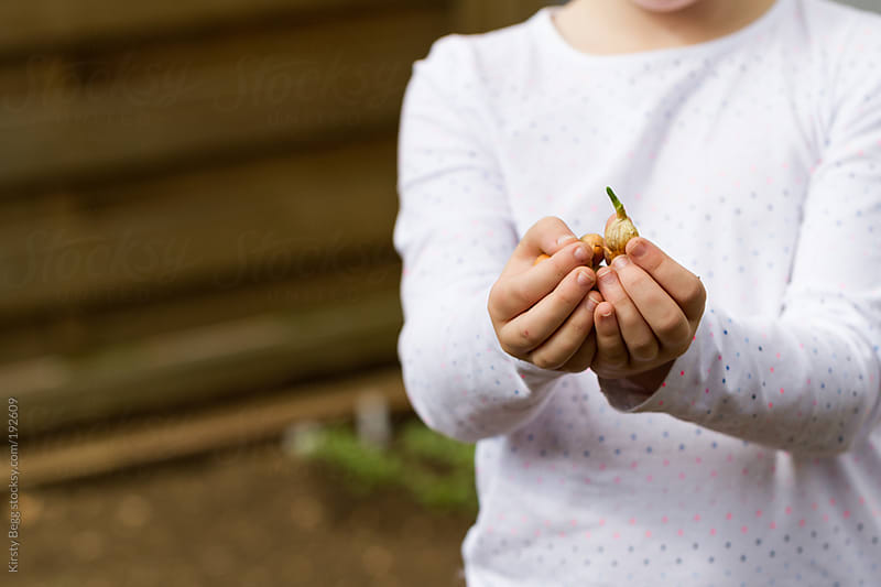 Girl holds onion bulbs ready to plant by Kirsty Begg for Stocksy United