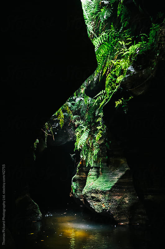 Green ferns cling to a steep rock face in a canyon. by Thomas Pickard Photography Ltd. for Stocksy United
