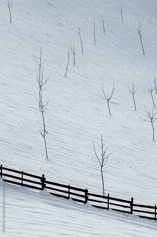 Trees in the snow. View on the orchard covered with snow. by Dimitrije Tanaskovic for Stocksy United