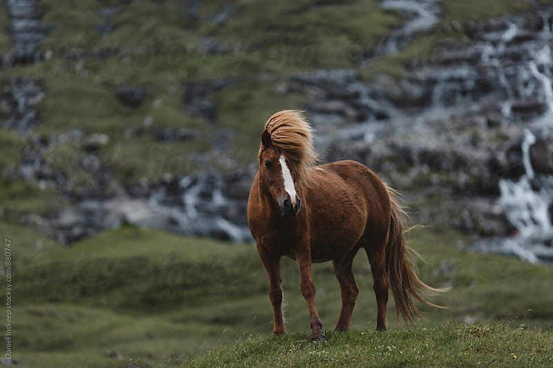 A Pony in Front of a Waterfall Backdrop by Daniel Inskeep for Stocksy United