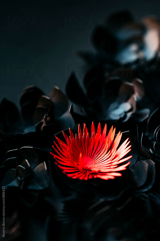 handmade red cardboard flower appears from black background by Beatrix Boros for Stocksy United