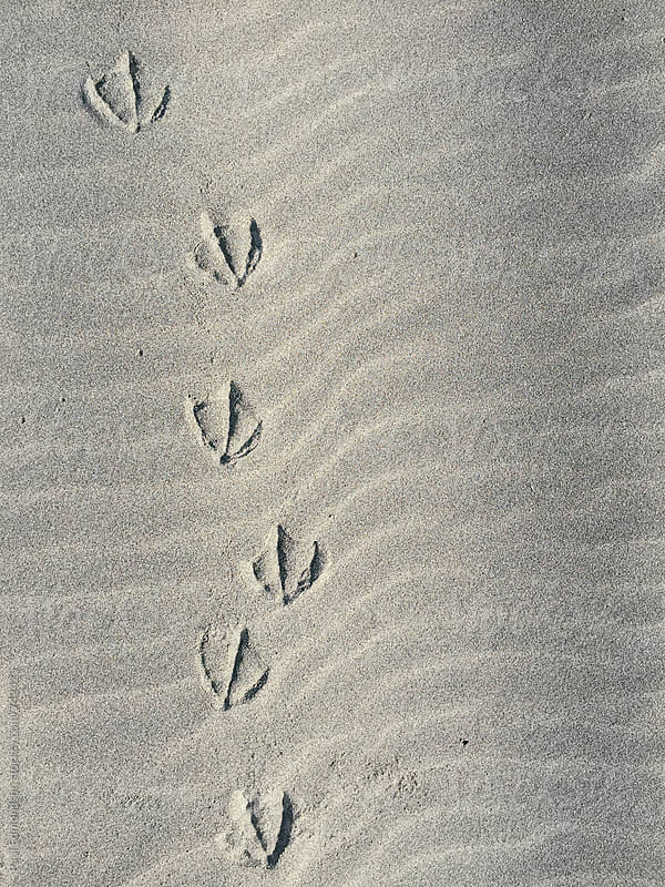 Seagull foot prints on sand, close up by Paul Edmondson for Stocksy United
