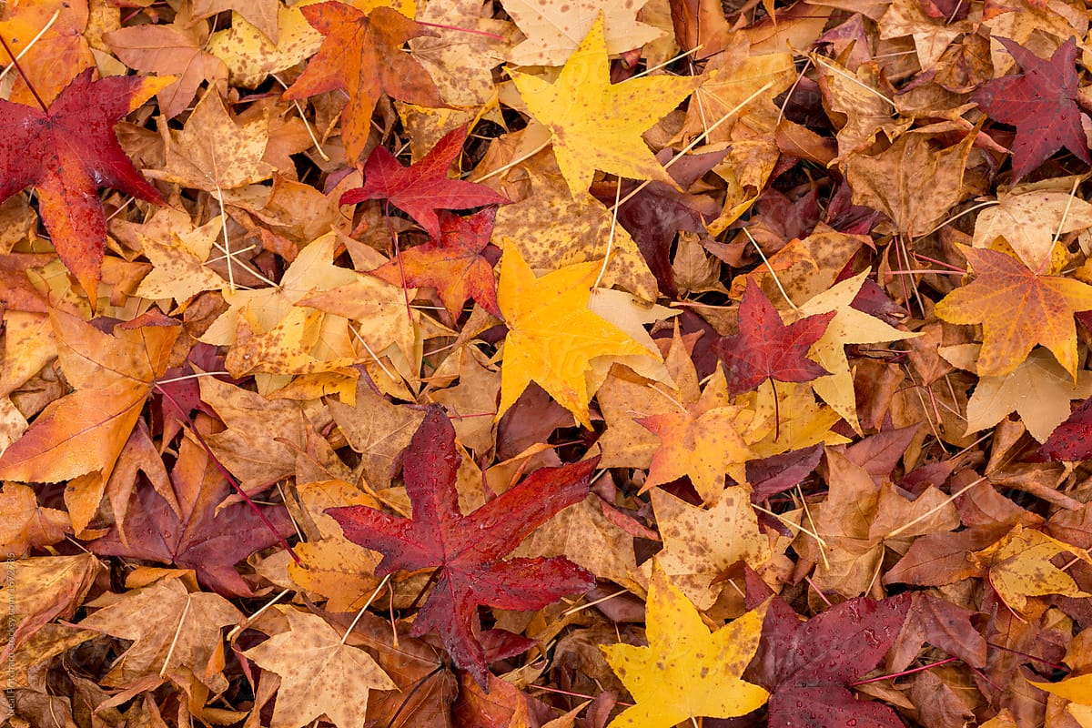 Autumn Leaves On Forest Floor by Neal Pritchard - Stocksy ...