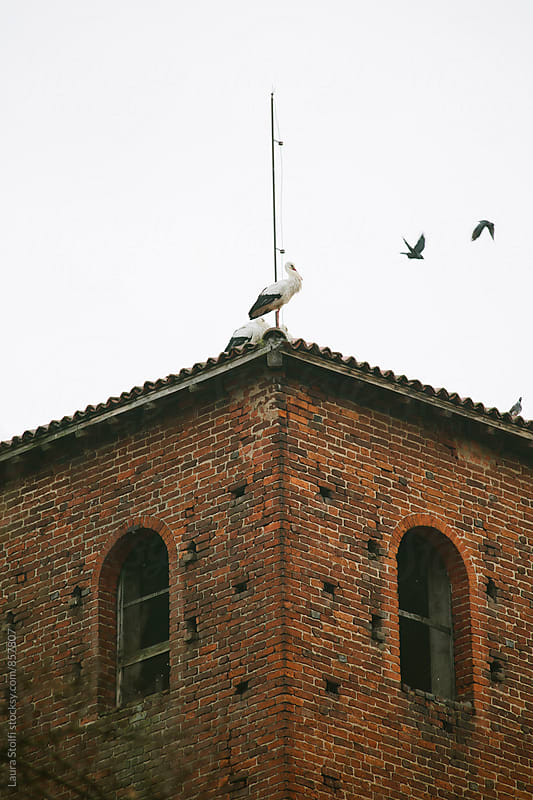 Crows  fly on top of roof close to storks in Pavia, Italy by Laura Stolfi for Stocksy United