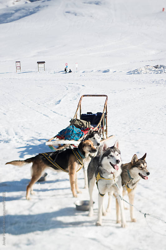sled of dogs at a ski resort in the mountains  by Javier Pardina for Stocksy United