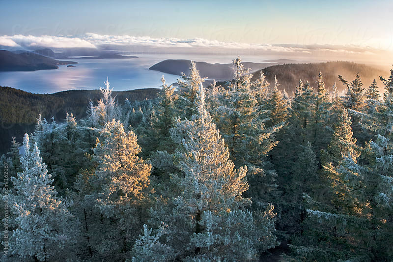 Aerial view of trees with frost in a forest a calm bay in the Pacific Northwest at sunrise by Mihael Blikshteyn for Stocksy United