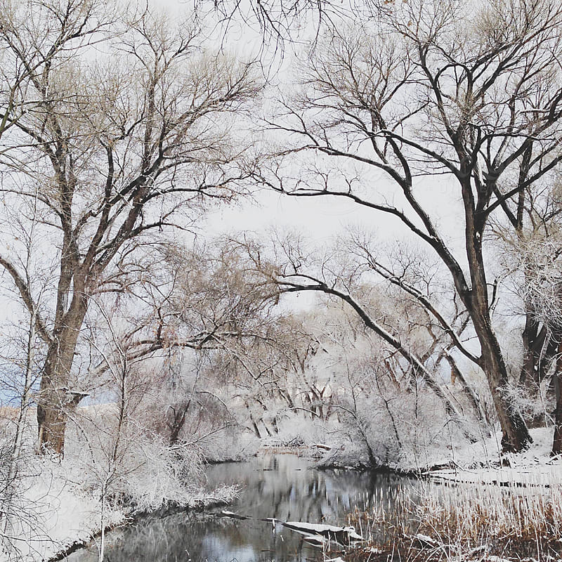 Winter Creek Canopy by Kevin Russ for Stocksy United