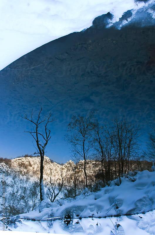 Naked tree reflection in mountain river by Marko Milovanović for Stocksy United