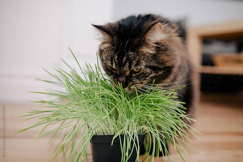 Cat with Catnip by Erik Naumann for Stocksy United