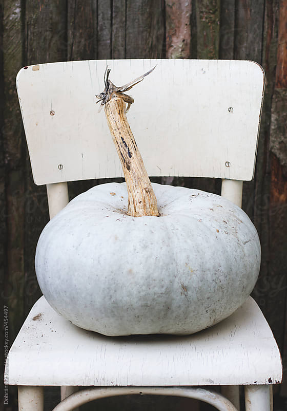 Squash on a wooden chair  by Dobránska Renáta for Stocksy United