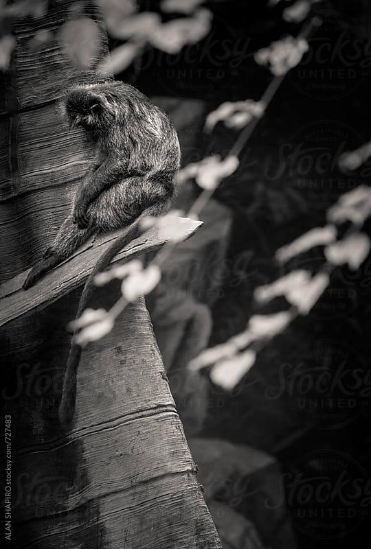 Hopeful...........Mopeful...........Nopeful. by ALAN SHAPIRO for Stocksy United