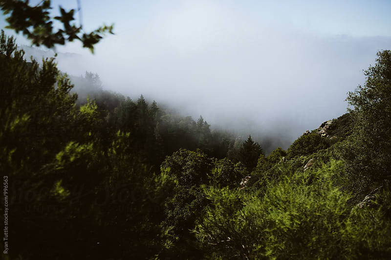 Santa Cruz Mountains by Ryan Tuttle for Stocksy United