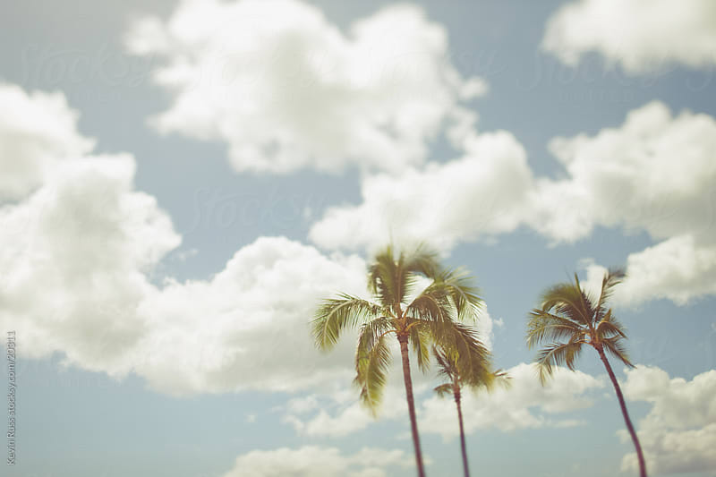 Palm Trees by Kevin Russ for Stocksy United
