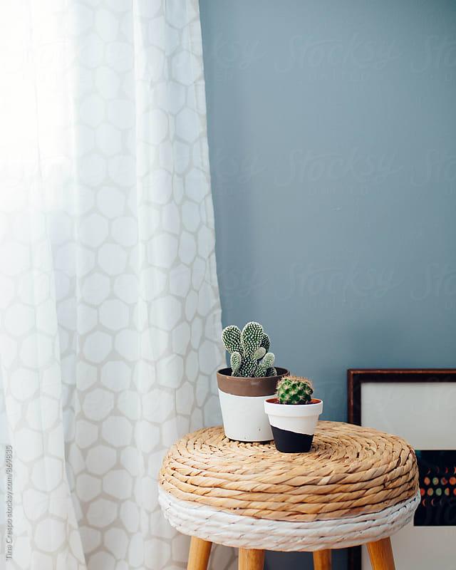 Cactus Plants Interior by Tina Crespo for Stocksy United