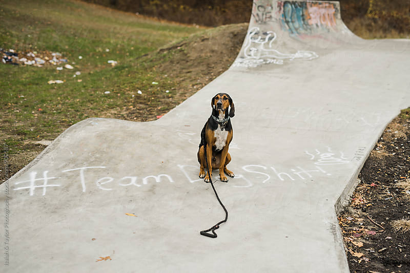 Dog sitting on skatepark by Isaiah & Taylor Photography for Stocksy United