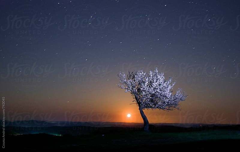 Night photography of tree in bloom at night with stars and moon by Cosma Andrei for Stocksy United
