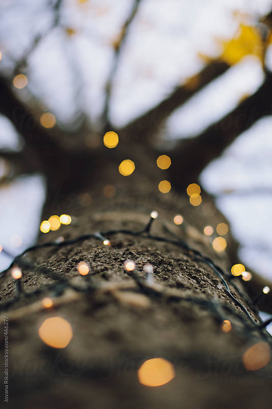Tree stump decorated with Christmas lights by Jovana Rikalo for Stocksy United