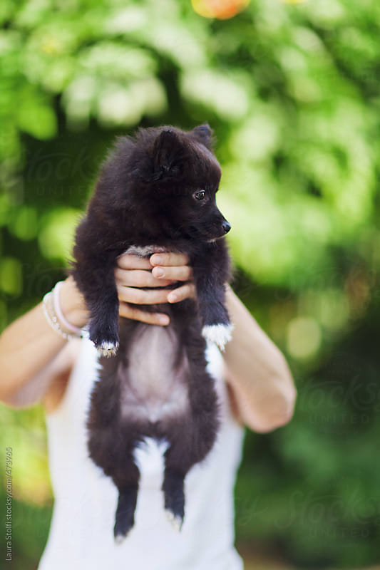 Woman holding in front of her face a black pomeanian puppy  by Laura Stolfi for Stocksy United