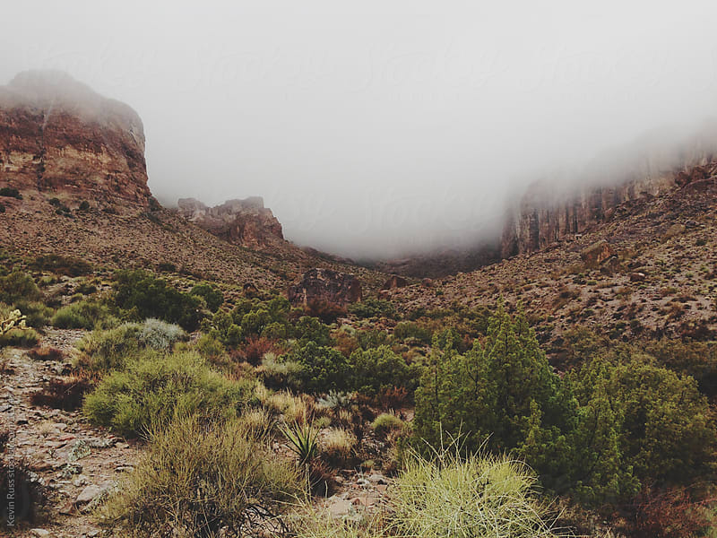 Lush Desert and Fog by Kevin Russ for Stocksy United