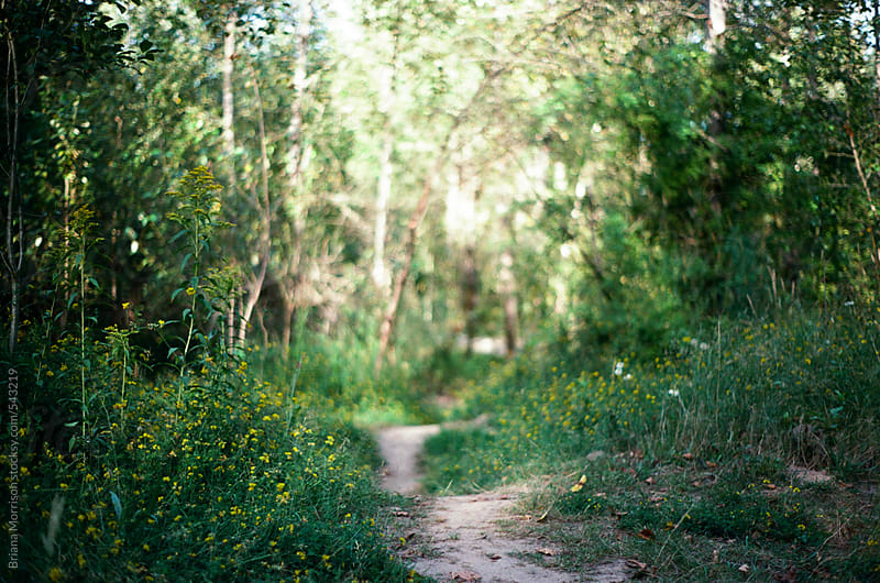 Sandy Path Through a Forest with Wildflowers and Sunlight. by Briana Morrison for Stocksy United